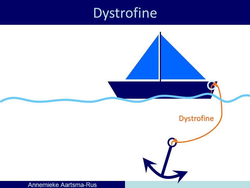 Dystrofine Annemieke Aartsma-Rus Dystrofine