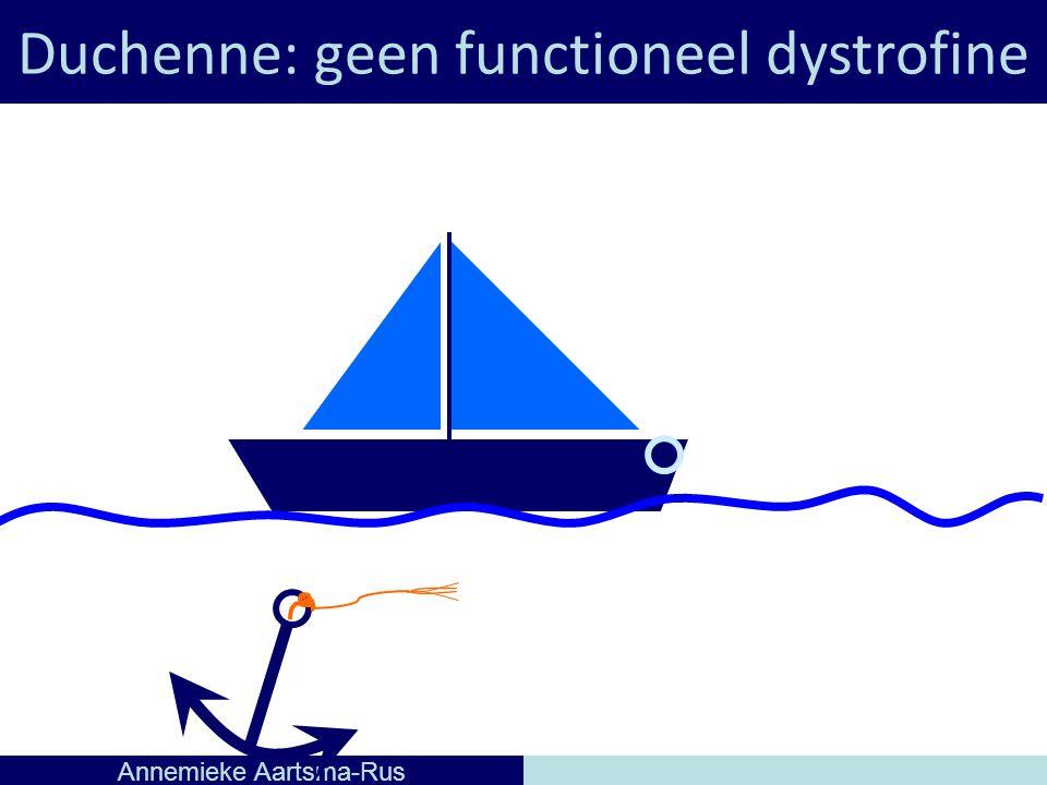 Duchenne: geen functioneel dystrofine Annemieke Aartsma-Rus