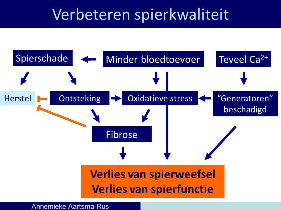 Verbeteren spierkwaliteit Annemieke Aartsma-Rus OntstekingHerstel Spierschade Fibrose Minder bloedtoevoerTeveel Ca 2+ Oxidatieve stress Generatoren beschadigd Verlies van spierweefsel Verlies van spierfunctie