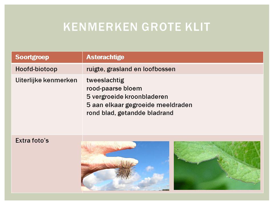 SoortgroepAsterachtige Hoofd-biotoopruigte, grasland en loofbossen Uiterlijke kenmerkentweeslachtig rood-paarse bloem 5 vergroeide kroonbladeren 5 aan