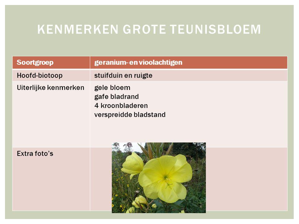 Soortgroepgeranium- en vioolachtigen Hoofd-biotoopstuifduin en ruigte Uiterlijke kenmerkengele bloem gafe bladrand 4 kroonbladeren verspreidde bladsta