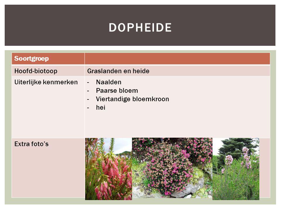 Soortgroep Hoofd-biotoopGraslanden en heide Uiterlijke kenmerken- Naalden -Paarse bloem -Viertandige bloemkroon -hei Extra foto's DOPHEIDE