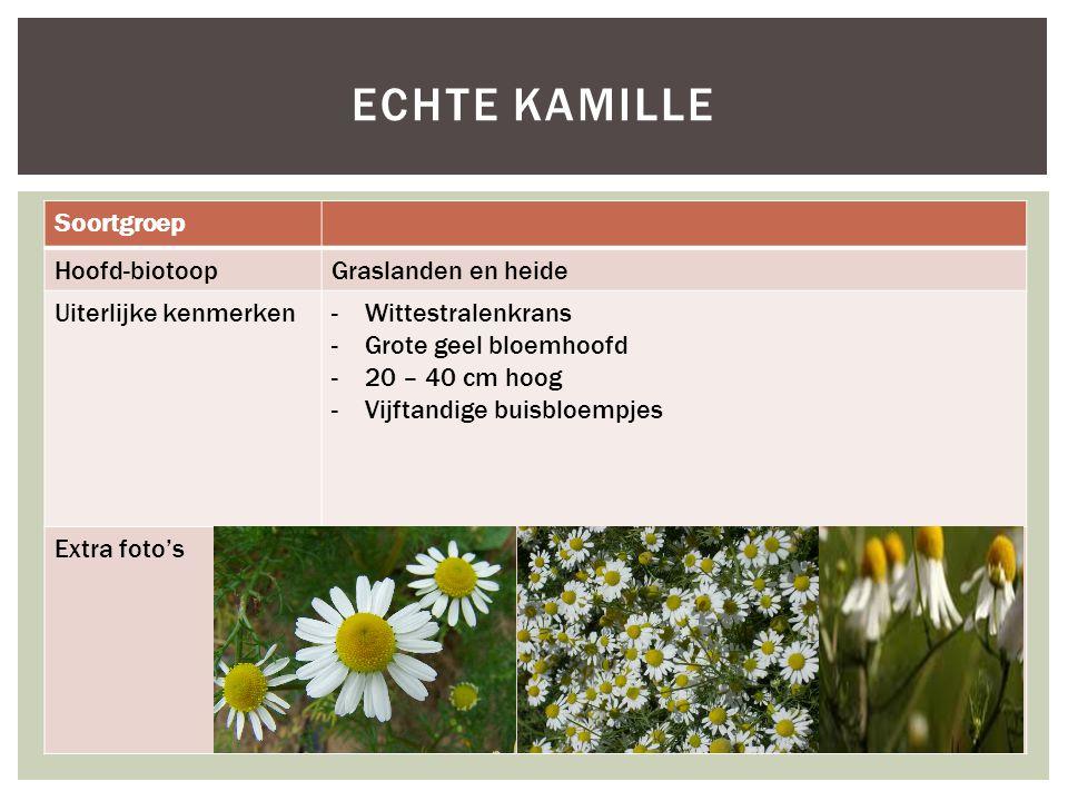 Soortgroep Hoofd-biotoopGraslanden en heide Uiterlijke kenmerken-Wittestralenkrans -Grote geel bloemhoofd -20 – 40 cm hoog -Vijftandige buisbloempjes