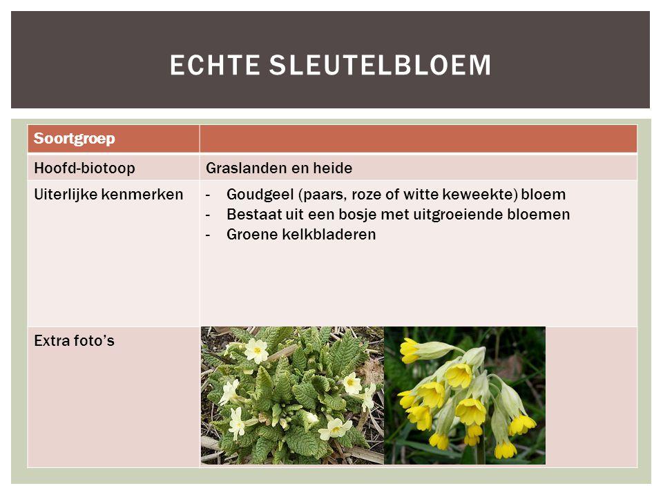 Soortgroep Hoofd-biotoopGraslanden en heide Uiterlijke kenmerken-Goudgeel (paars, roze of witte keweekte) bloem -Bestaat uit een bosje met uitgroeiend