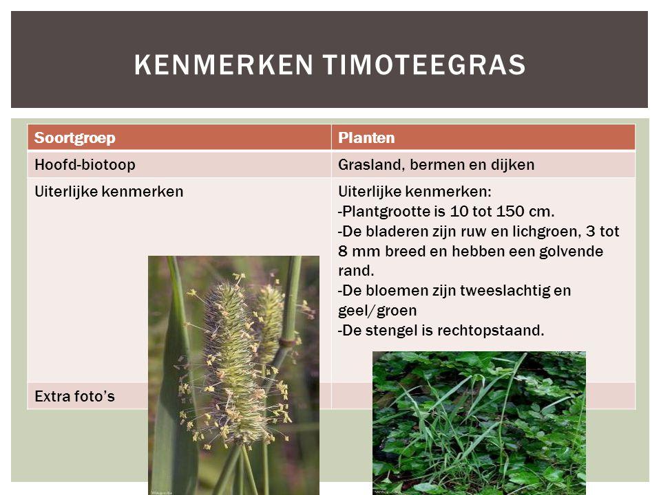 SoortgroepPlanten Hoofd-biotoopGrasland, bermen en dijken Uiterlijke kenmerkenUiterlijke kenmerken: -Plantgrootte is 10 tot 150 cm. -De bladeren zijn