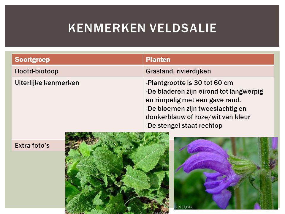 SoortgroepPlanten Hoofd-biotoopGrasland, rivierdijken Uiterlijke kenmerken-Plantgrootte is 30 tot 60 cm -De bladeren zijn eirond tot langwerpig en rim