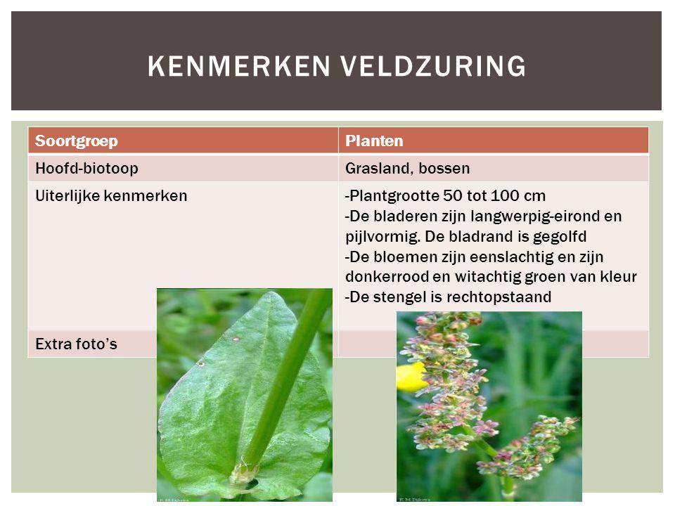 SoortgroepPlanten Hoofd-biotoopGrasland, bossen Uiterlijke kenmerken-Plantgrootte 50 tot 100 cm -De bladeren zijn langwerpig-eirond en pijlvormig. De