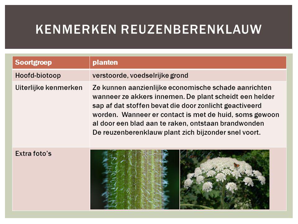 Soortgroepplanten Hoofd-biotoopverstoorde, voedselrijke grond Uiterlijke kenmerkenZe kunnen aanzienlijke economische schade aanrichten wanneer ze akke