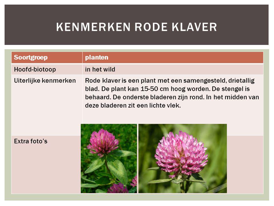 Soortgroepplanten Hoofd-biotoopin het wild Uiterlijke kenmerkenRode klaver is een plant met een samengesteld, drietallig blad. De plant kan 15-50 cm h