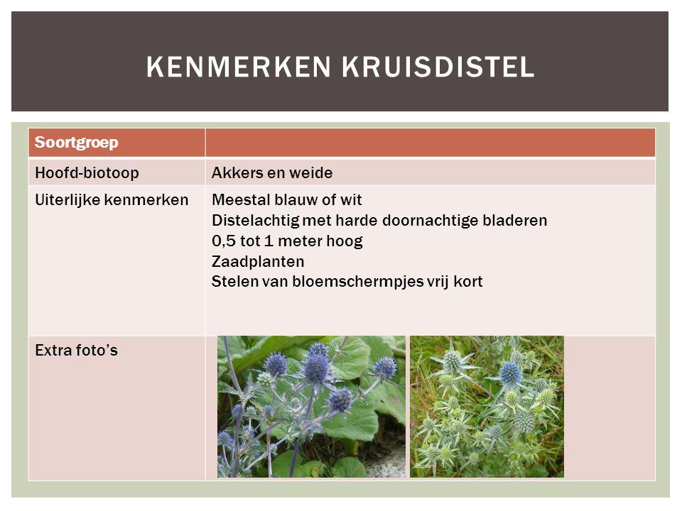 Soortgroep Hoofd-biotoopAkkers en weide Uiterlijke kenmerkenMeestal blauw of wit Distelachtig met harde doornachtige bladeren 0,5 tot 1 meter hoog Zaa