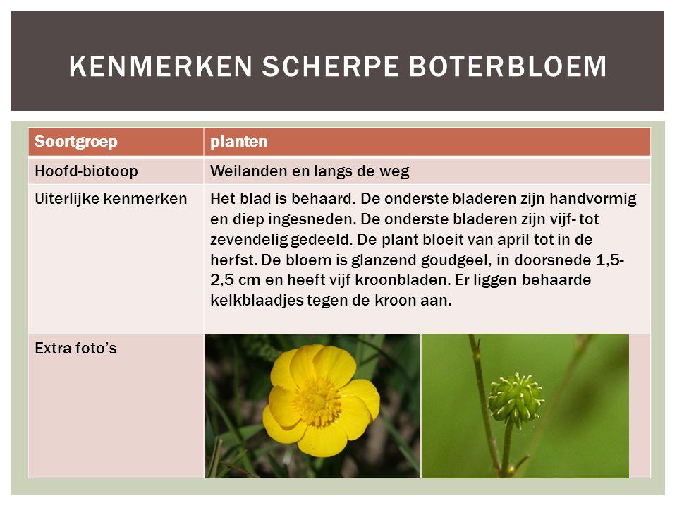 Soortgroepplanten Hoofd-biotoopWeilanden en langs de weg Uiterlijke kenmerkenHet blad is behaard. De onderste bladeren zijn handvormig en diep ingesne