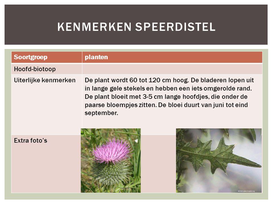 Soortgroepplanten Hoofd-biotoop Uiterlijke kenmerkenDe plant wordt 60 tot 120 cm hoog. De bladeren lopen uit in lange gele stekels en hebben een iets