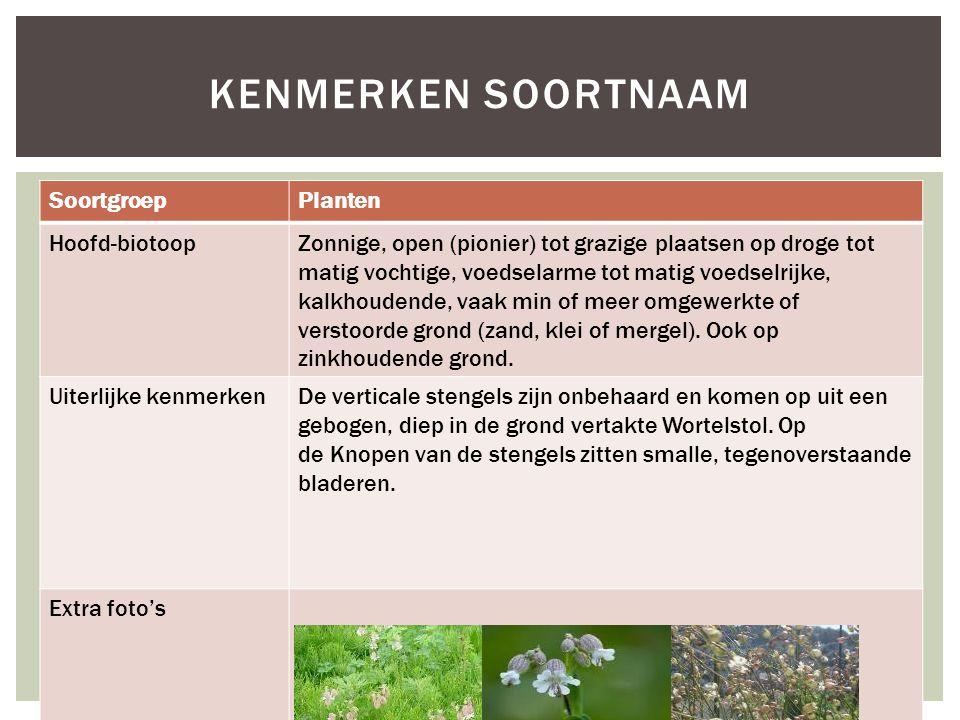 SoortgroepPlanten Hoofd-biotoopZonnige, open (pionier) tot grazige plaatsen op droge tot matig vochtige, voedselarme tot matig voedselrijke, kalkhoude