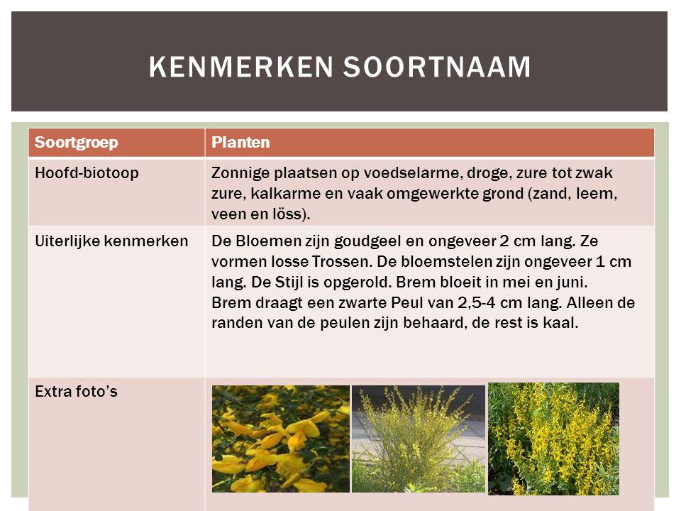 SoortgroepPlanten Hoofd-biotoopZonnige plaatsen op voedselarme, droge, zure tot zwak zure, kalkarme en vaak omgewerkte grond (zand, leem, veen en löss