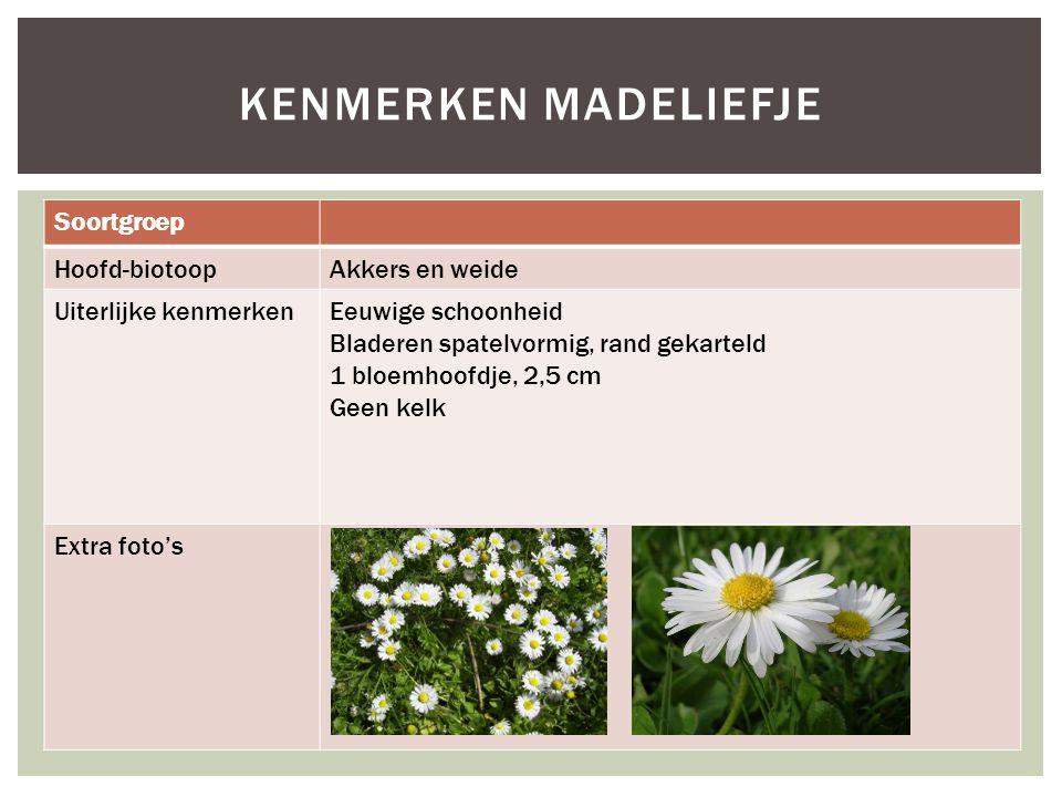 Soortgroep Hoofd-biotoopAkkers en weide Uiterlijke kenmerkenEeuwige schoonheid Bladeren spatelvormig, rand gekarteld 1 bloemhoofdje, 2,5 cm Geen kelk