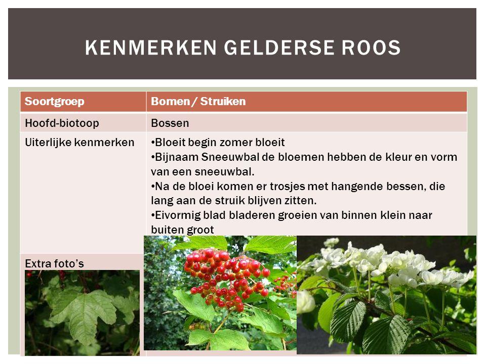 SoortgroepBomen / Struiken Hoofd-biotoopBossen Uiterlijke kenmerken Bloeit begin zomer bloeit Bijnaam Sneeuwbal de bloemen hebben de kleur en vorm van