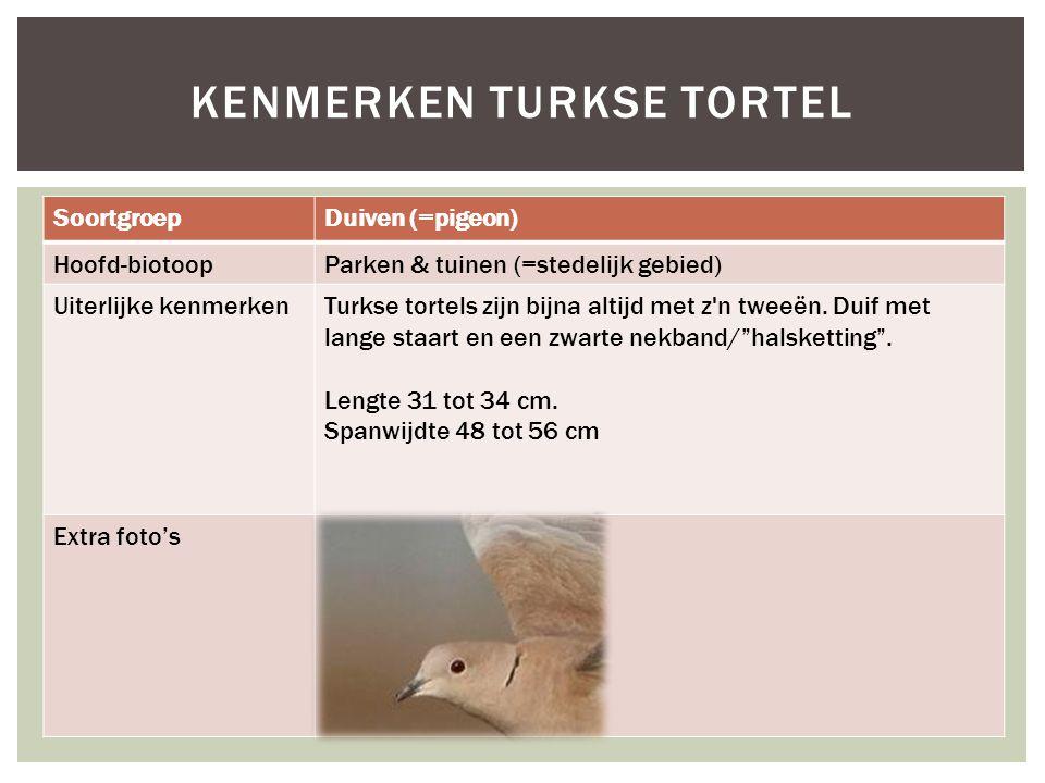 SoortgroepDuiven (=pigeon) Hoofd-biotoopParken & tuinen (=stedelijk gebied) Uiterlijke kenmerkenTurkse tortels zijn bijna altijd met z'n tweeën. Duif