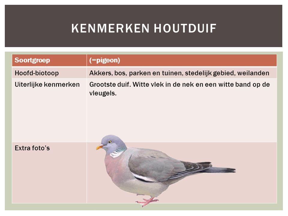 Soortgroep(=pigeon) Hoofd-biotoopAkkers, bos, parken en tuinen, stedelijk gebied, weilanden Uiterlijke kenmerkenGrootste duif. Witte vlek in de nek en