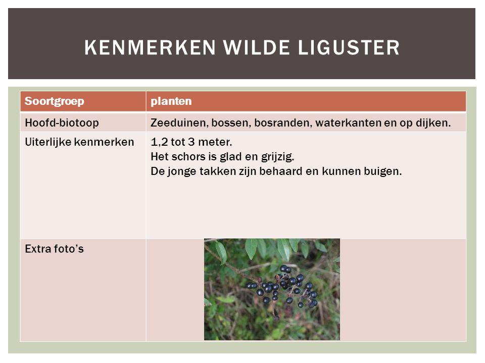 Soortgroepplanten Hoofd-biotoopZeeduinen, bossen, bosranden, waterkanten en op dijken. Uiterlijke kenmerken1,2 tot 3 meter. Het schors is glad en grij