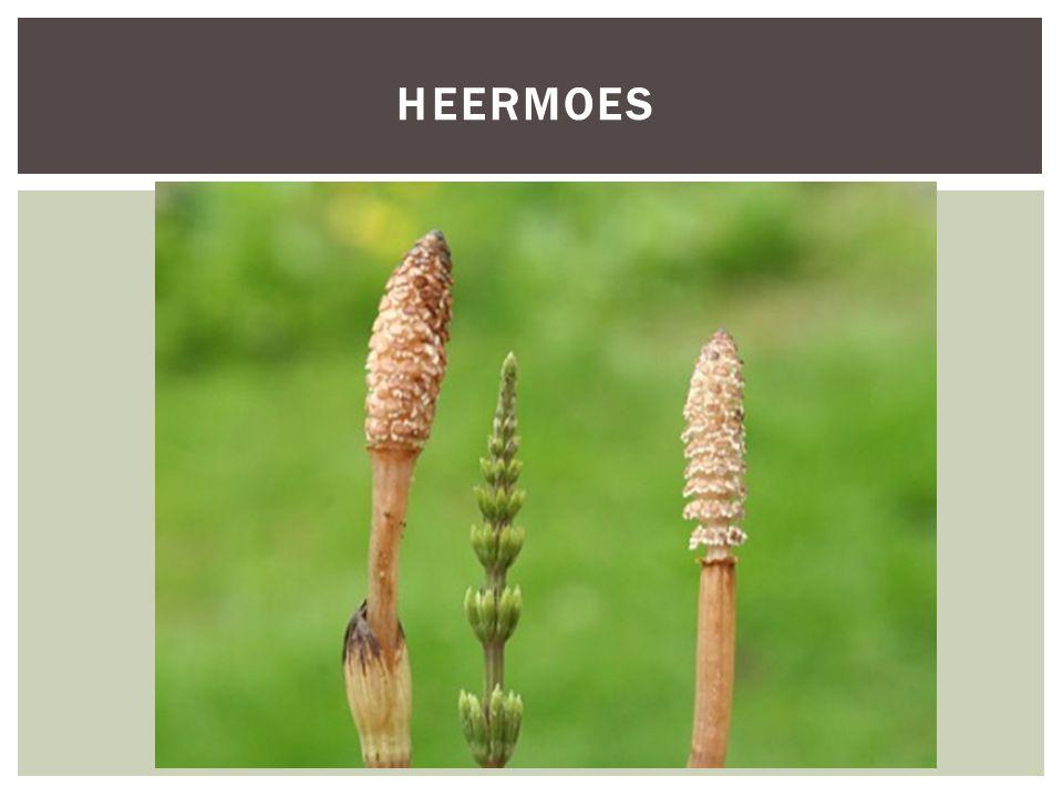HEERMOES