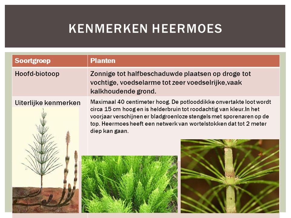 SoortgroepPlanten Hoofd-biotoopZonnige tot halfbeschaduwde plaatsen op droge tot vochtige, voedselarme tot zeer voedselrijke,vaak kalkhoudende grond.