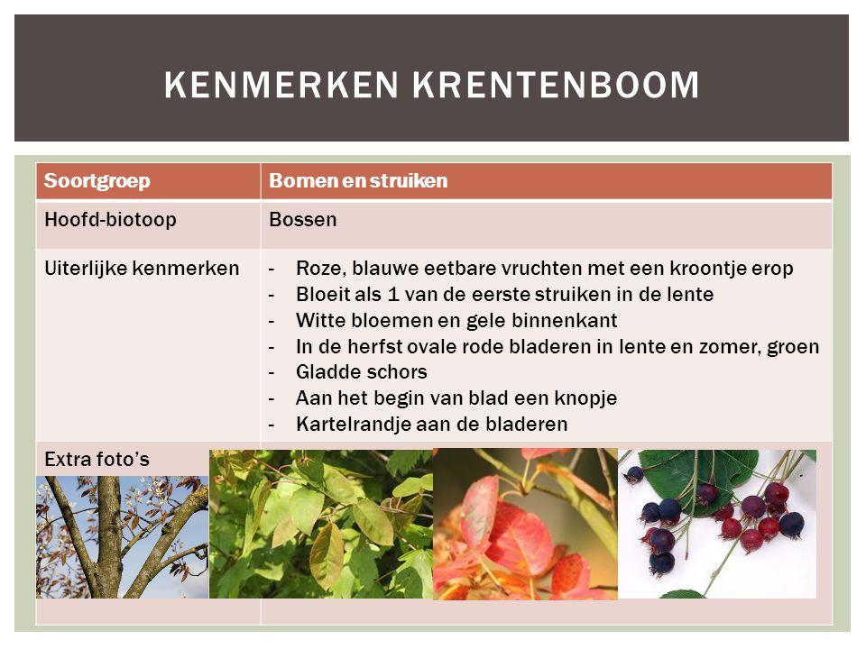 SoortgroepBomen en struiken Hoofd-biotoopBossen Uiterlijke kenmerken-Roze, blauwe eetbare vruchten met een kroontje erop -Bloeit als 1 van de eerste s
