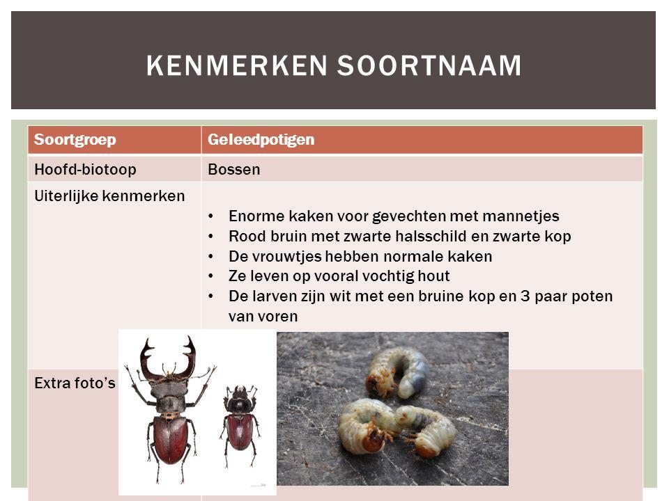 SoortgroepGeleedpotigen Hoofd-biotoopBossen Uiterlijke kenmerken Enorme kaken voor gevechten met mannetjes Rood bruin met zwarte halsschild en zwarte