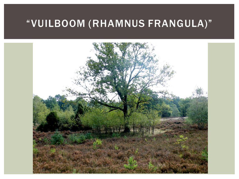 """""""VUILBOOM (RHAMNUS FRANGULA)"""""""