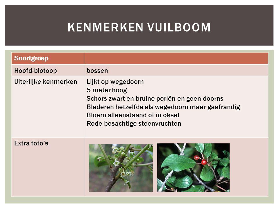 Soortgroep Hoofd-biotoopbossen Uiterlijke kenmerkenLijkt op wegedoorn 5 meter hoog Schors zwart en bruine poriën en geen doorns Bladeren hetzelfde als