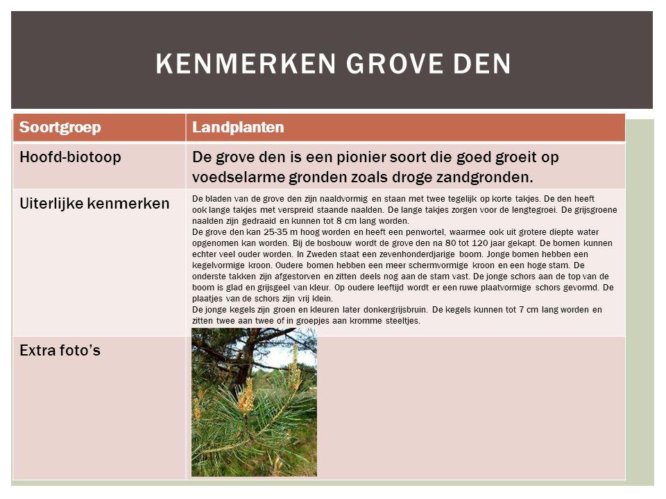 SoortgroepLandplanten Hoofd-biotoopDe grove den is een pionier soort die goed groeit op voedselarme gronden zoals droge zandgronden. Uiterlijke kenmer