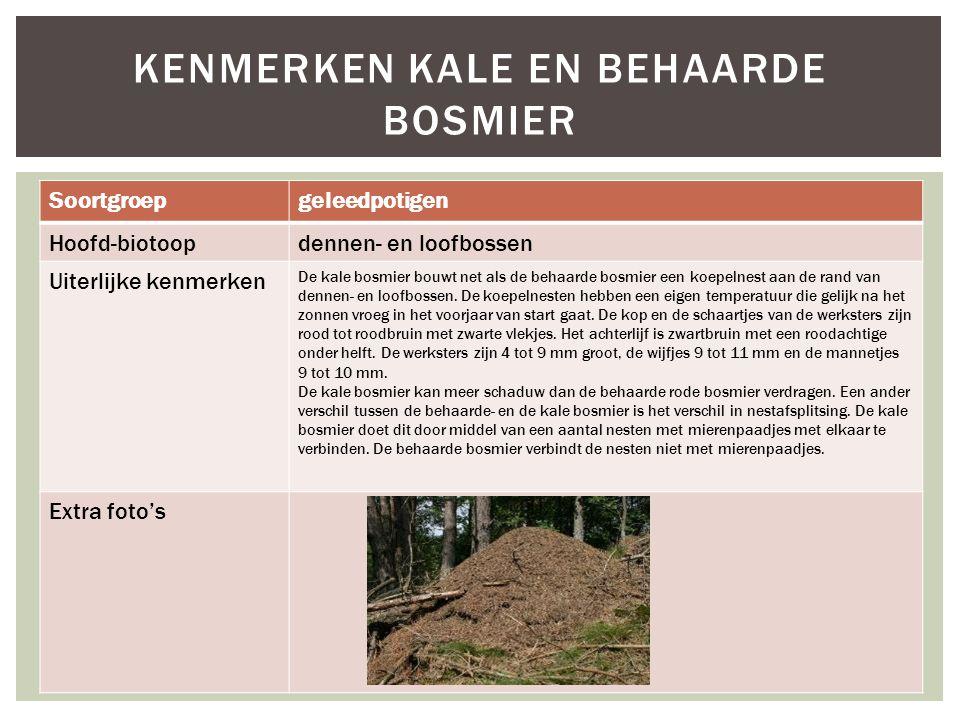 Soortgroepgeleedpotigen Hoofd-biotoopdennen- en loofbossen Uiterlijke kenmerken De kale bosmier bouwt net als de behaarde bosmier een koepelnest aan d