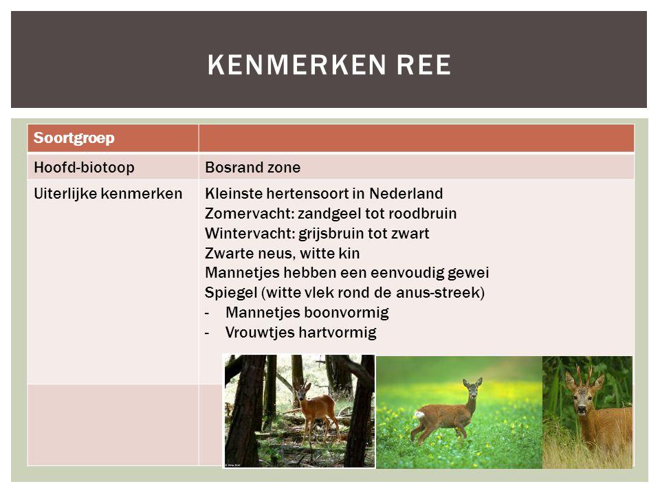 Soortgroep Hoofd-biotoopBosrand zone Uiterlijke kenmerkenKleinste hertensoort in Nederland Zomervacht: zandgeel tot roodbruin Wintervacht: grijsbruin