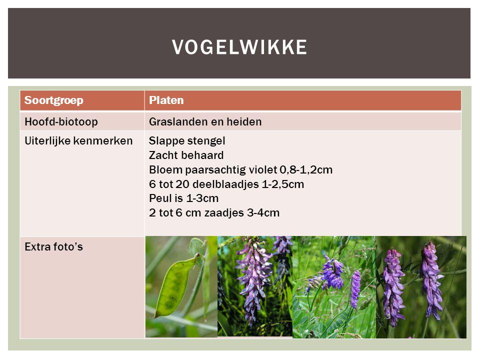 SoortgroepPlaten Hoofd-biotoopGraslanden en heiden Uiterlijke kenmerkenSlappe stengel Zacht behaard Bloem paarsachtig violet 0,8-1,2cm 6 tot 20 deelblaadjes 1-2,5cm Peul is 1-3cm 2 tot 6 cm zaadjes 3-4cm Extra foto's VOGELWIKKE