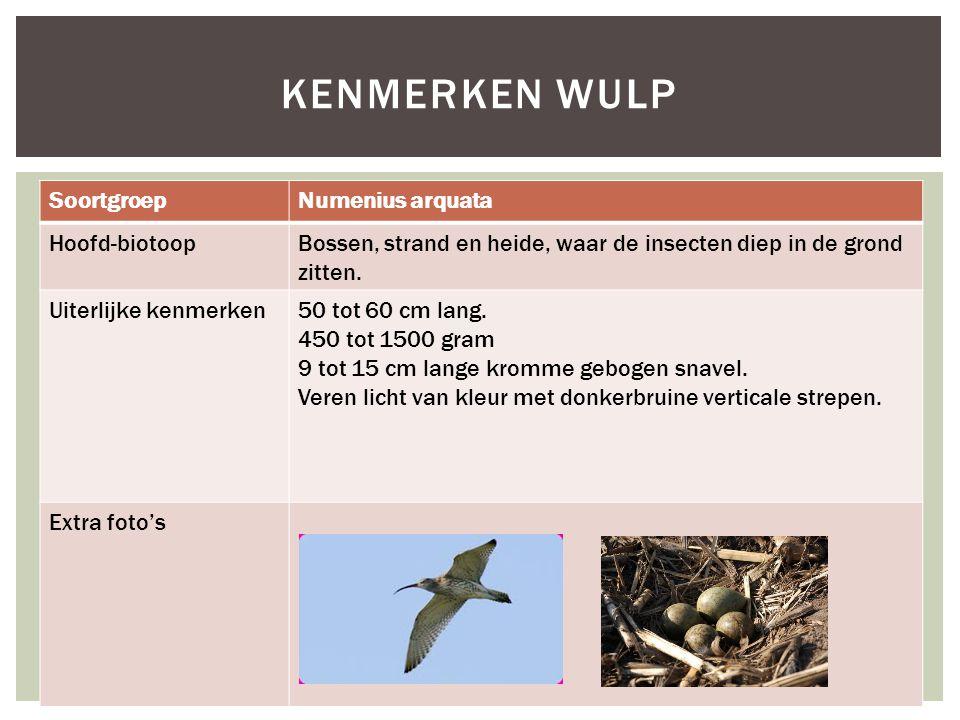 SoortgroepNumenius arquata Hoofd-biotoopBossen, strand en heide, waar de insecten diep in de grond zitten.