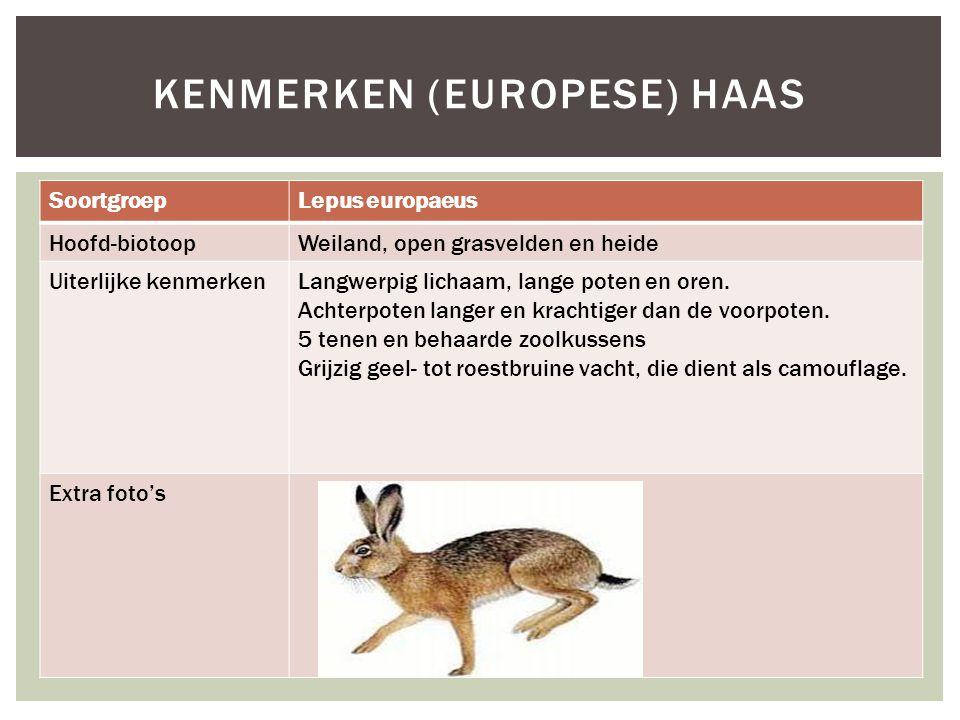 SoortgroepLepus europaeus Hoofd-biotoopWeiland, open grasvelden en heide Uiterlijke kenmerkenLangwerpig lichaam, lange poten en oren.