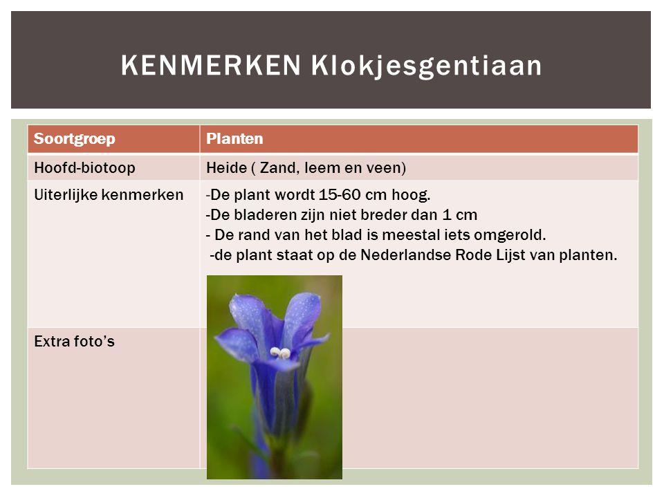 SoortgroepPlanten Hoofd-biotoopHeide ( Zand, leem en veen) Uiterlijke kenmerken-De plant wordt 15-60 cm hoog.