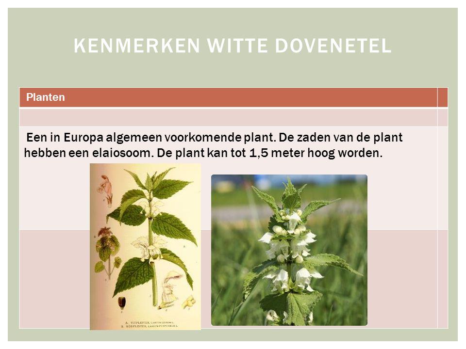 Planten Een in Europa algemeen voorkomende plant.De zaden van de plant hebben een elaiosoom.