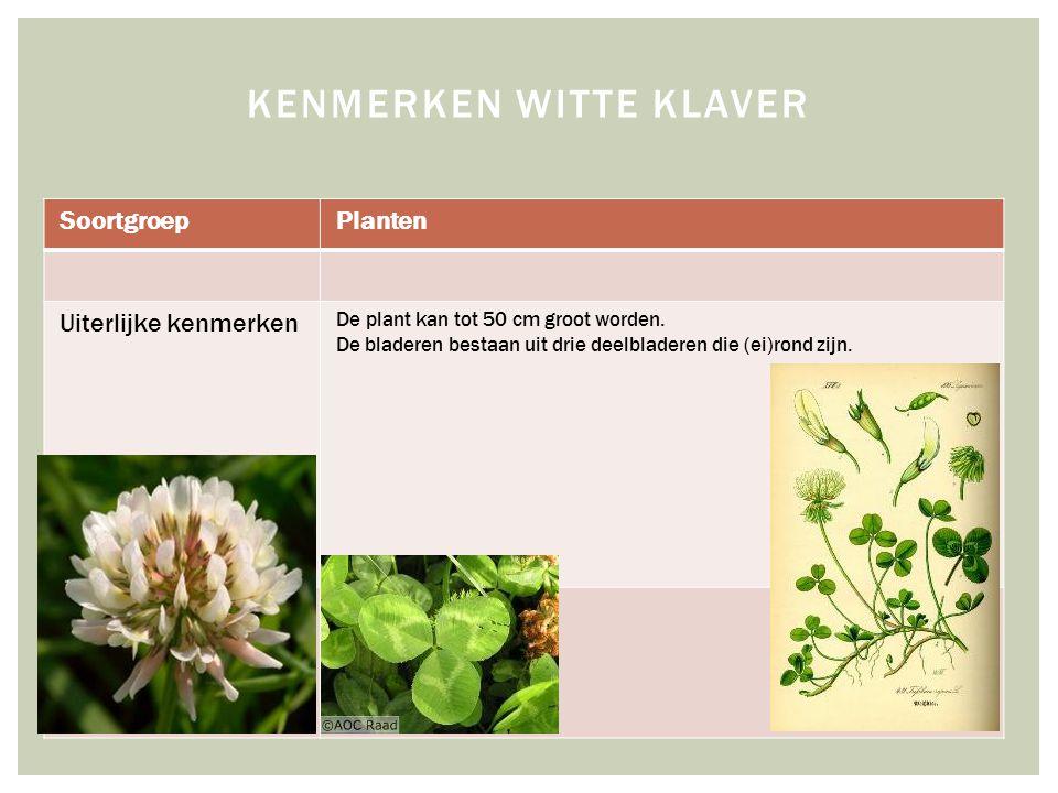 SoortgroepPlanten Uiterlijke kenmerken De plant kan tot 50 cm groot worden.