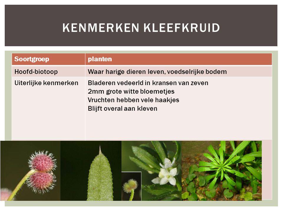 Soortgroepplanten Hoofd-biotoopWaar harige dieren leven, voedselrijke bodem Uiterlijke kenmerkenBladeren vedeerld in kransen van zeven 2mm grote witte bloemetjes Vruchten hebben vele haakjes Blijft overal aan kleven Extra foto's KENMERKEN KLEEFKRUID