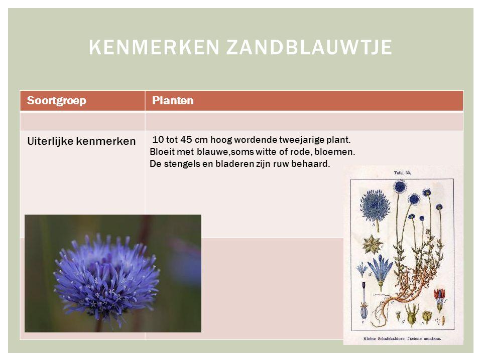 SoortgroepPlanten Uiterlijke kenmerken 10 tot 45 cm hoog wordende tweejarige plant.