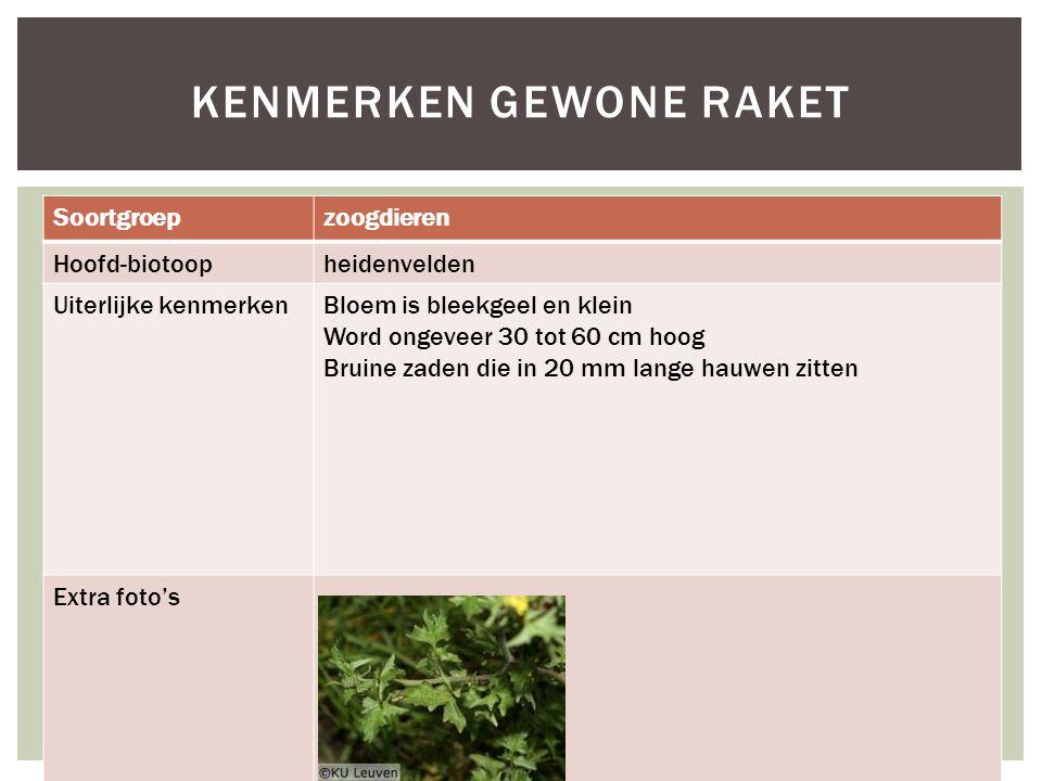 Soortgroepzoogdieren Hoofd-biotoopheidenvelden Uiterlijke kenmerkenBloem is bleekgeel en klein Word ongeveer 30 tot 60 cm hoog Bruine zaden die in 20 mm lange hauwen zitten Extra foto's KENMERKEN GEWONE RAKET