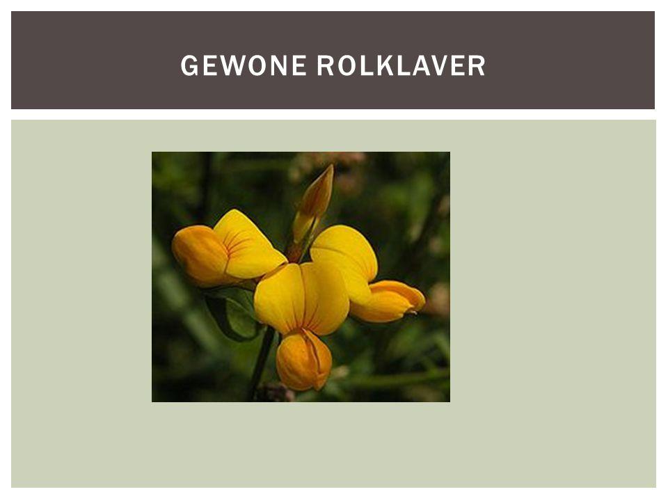 GEWONE ROLKLAVER