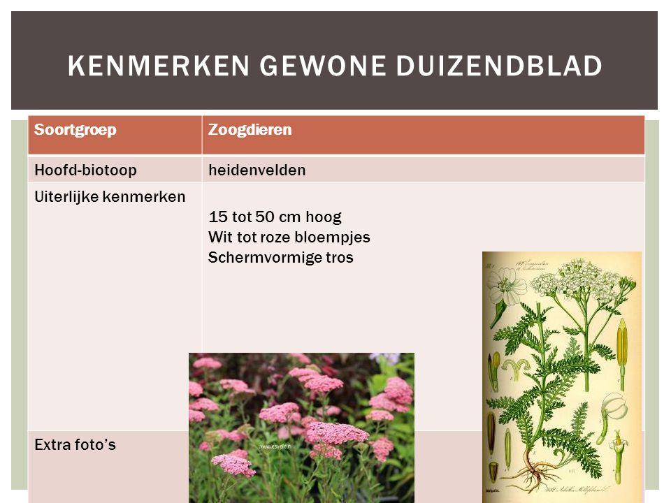 SoortgroepZoogdieren Hoofd-biotoopheidenvelden Uiterlijke kenmerken 15 tot 50 cm hoog Wit tot roze bloempjes Schermvormige tros Extra foto's KENMERKEN GEWONE DUIZENDBLAD