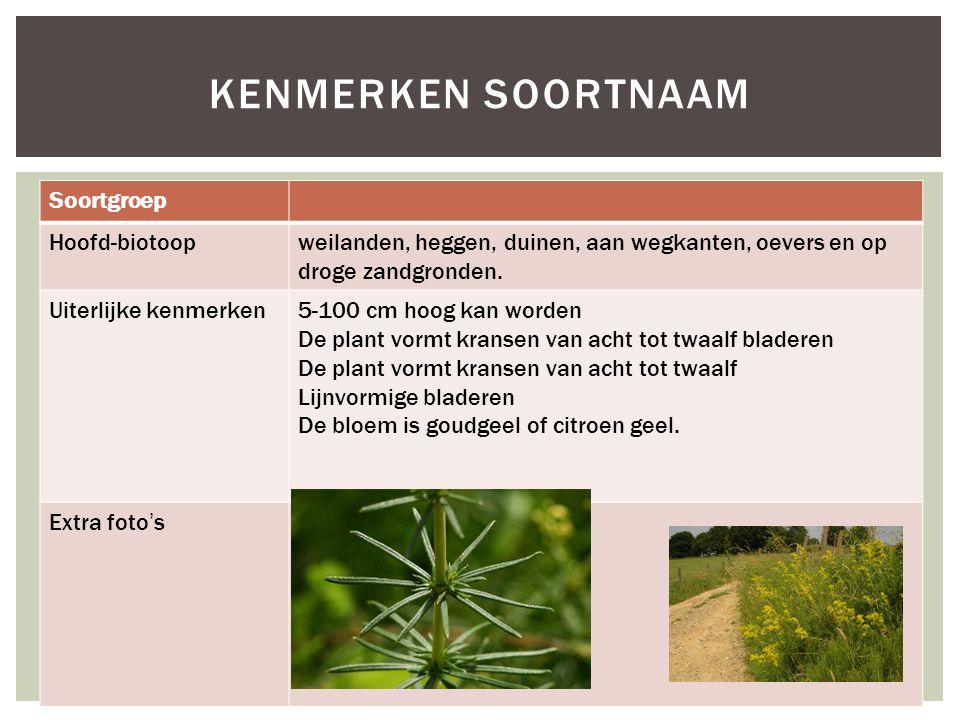 Soortgroep Hoofd-biotoopweilanden, heggen, duinen, aan wegkanten, oevers en op droge zandgronden.
