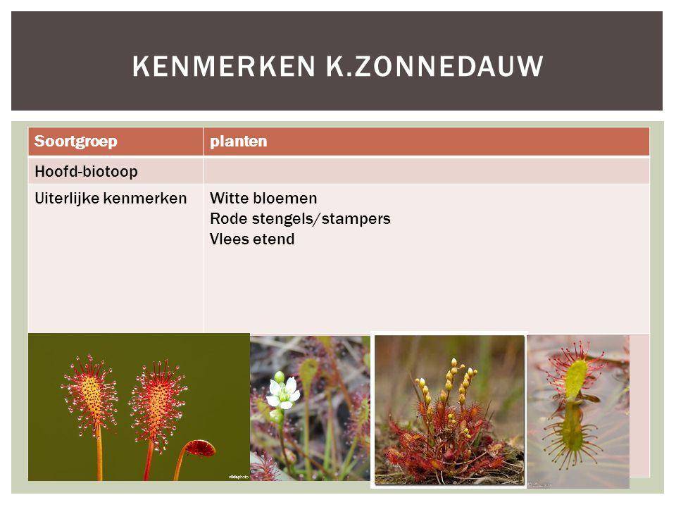 Soortgroepplanten Hoofd-biotoop Uiterlijke kenmerkenWitte bloemen Rode stengels/stampers Vlees etend Extra foto's KENMERKEN K.ZONNEDAUW