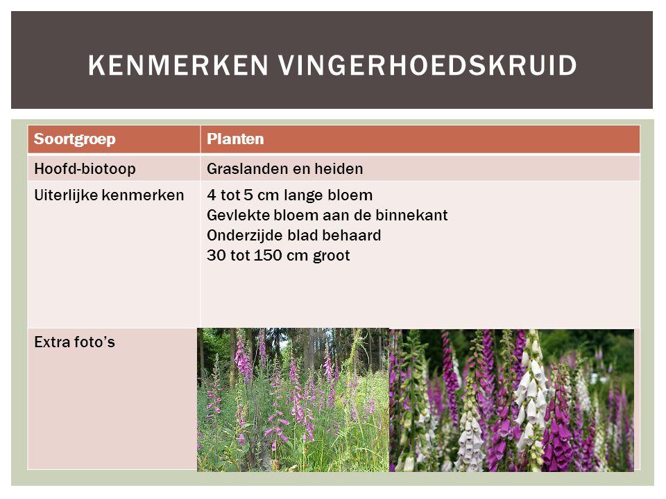 SoortgroepPlanten Hoofd-biotoopGraslanden en heiden Uiterlijke kenmerken4 tot 5 cm lange bloem Gevlekte bloem aan de binnekant Onderzijde blad behaard 30 tot 150 cm groot Extra foto's KENMERKEN VINGERHOEDSKRUID