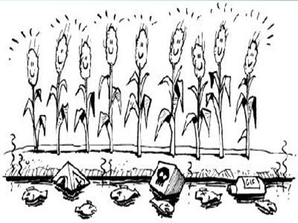 Verordening reininging verpakking bestrijdingsmiddelen Verpakkingen direct na leegmaken schoonspoelen Dan geen chemisch afval meer Meestal bij het restafval Spuiten groter dan 21 liter -> fustreiniger Op spuitmachine of bij vulplaats Op spuitmachine of bij vulplaats