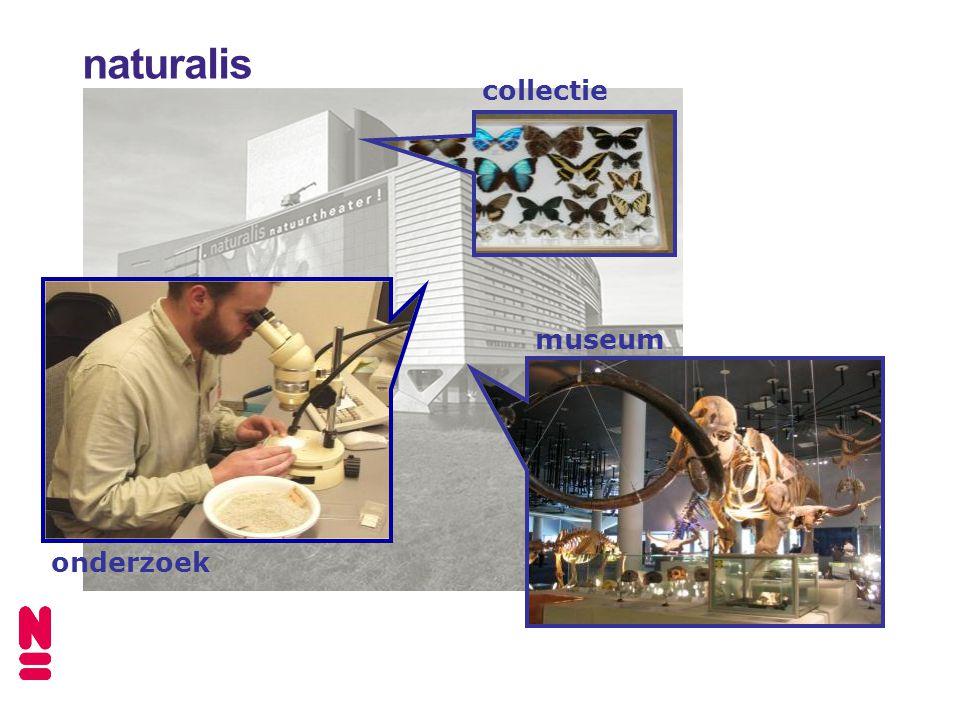 museum onderzoek collectie