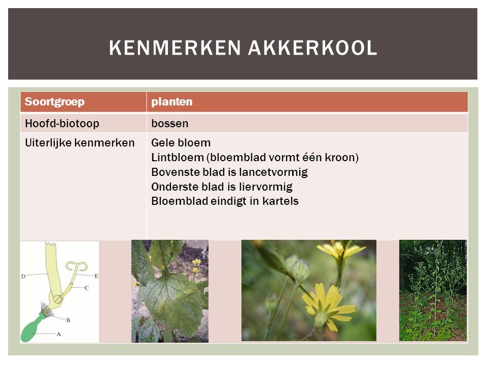 Soortgroepplanten Hoofd-biotoopbossen Uiterlijke kenmerkenGele bloem Lintbloem (bloemblad vormt één kroon) Bovenste blad is lancetvormig Onderste blad