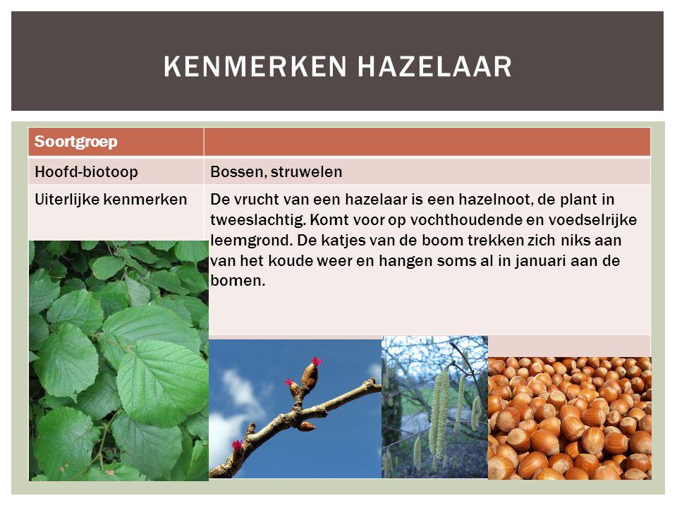 Soortgroep Hoofd-biotoopBossen, struwelen Uiterlijke kenmerkenDe vrucht van een hazelaar is een hazelnoot, de plant in tweeslachtig. Komt voor op voch
